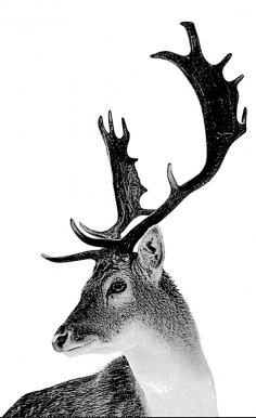 Deer BMP File
