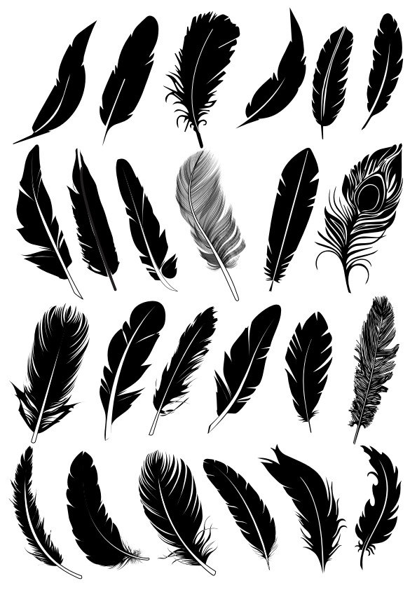 Black Feather Vector Collection Free Vector