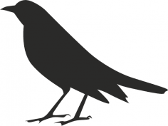 Halloween Crow Silhouette Free Vector