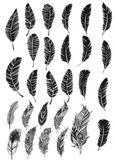 Feather Free Vector