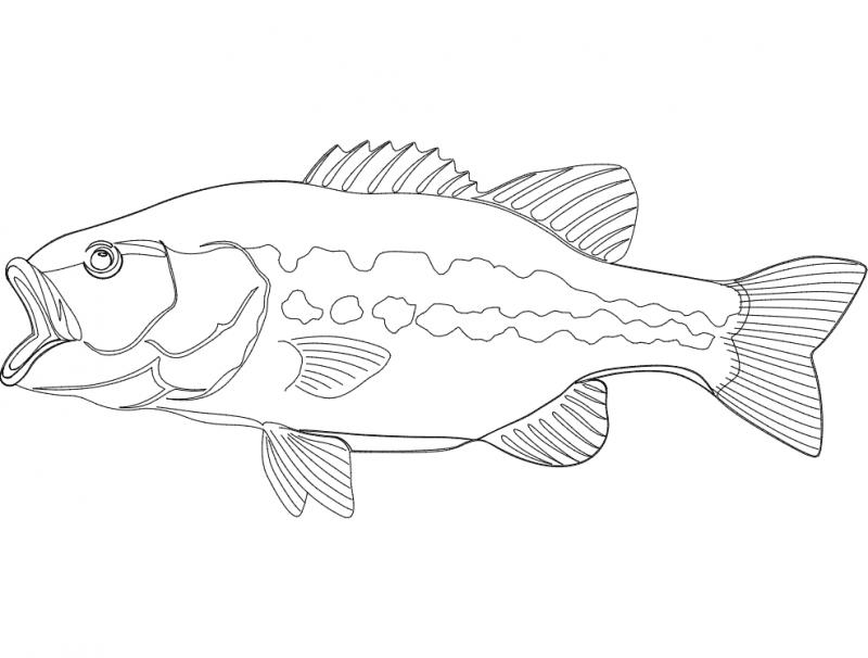 Peixe dxf File
