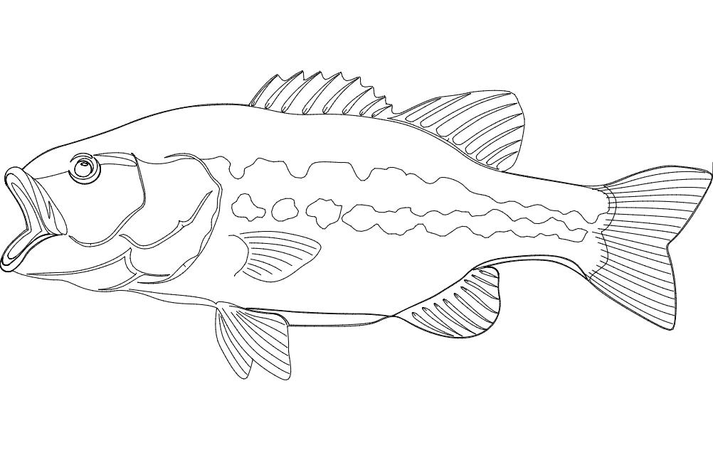 Largemouth bass Fish dxf File