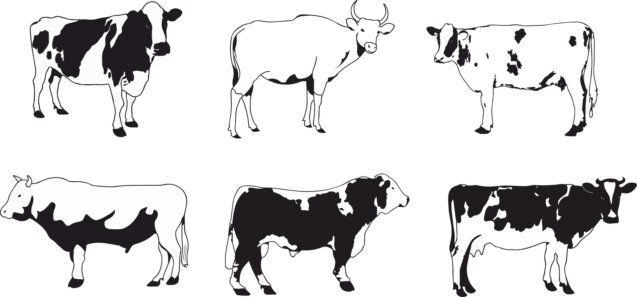 Cows Vector Set Free Vector