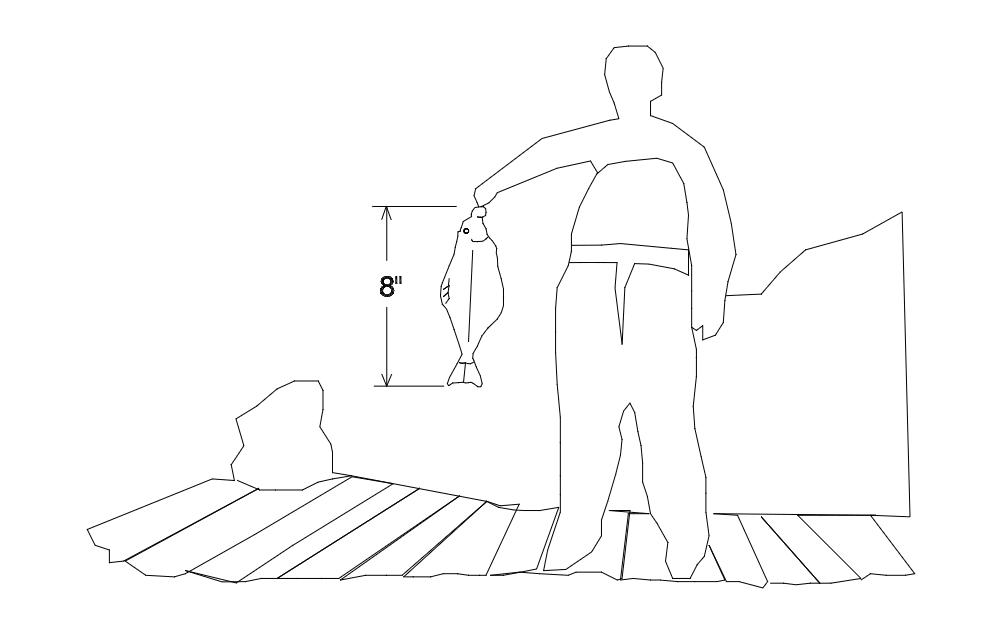 Halibut sized dxf File