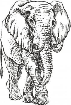 Elephant Engr Vector Free Vector