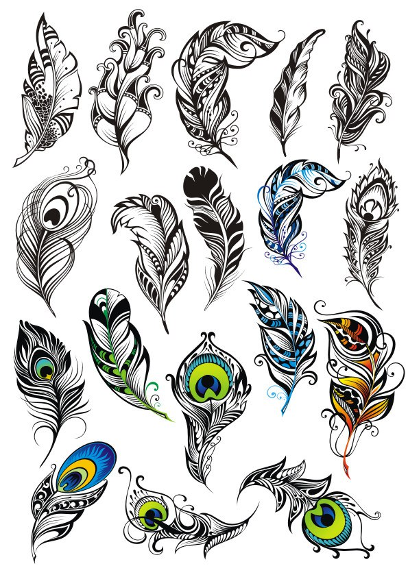 Peacock Feather Vector Set Free Vector