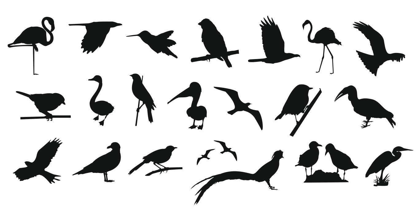Collection Of Birds Free Vector