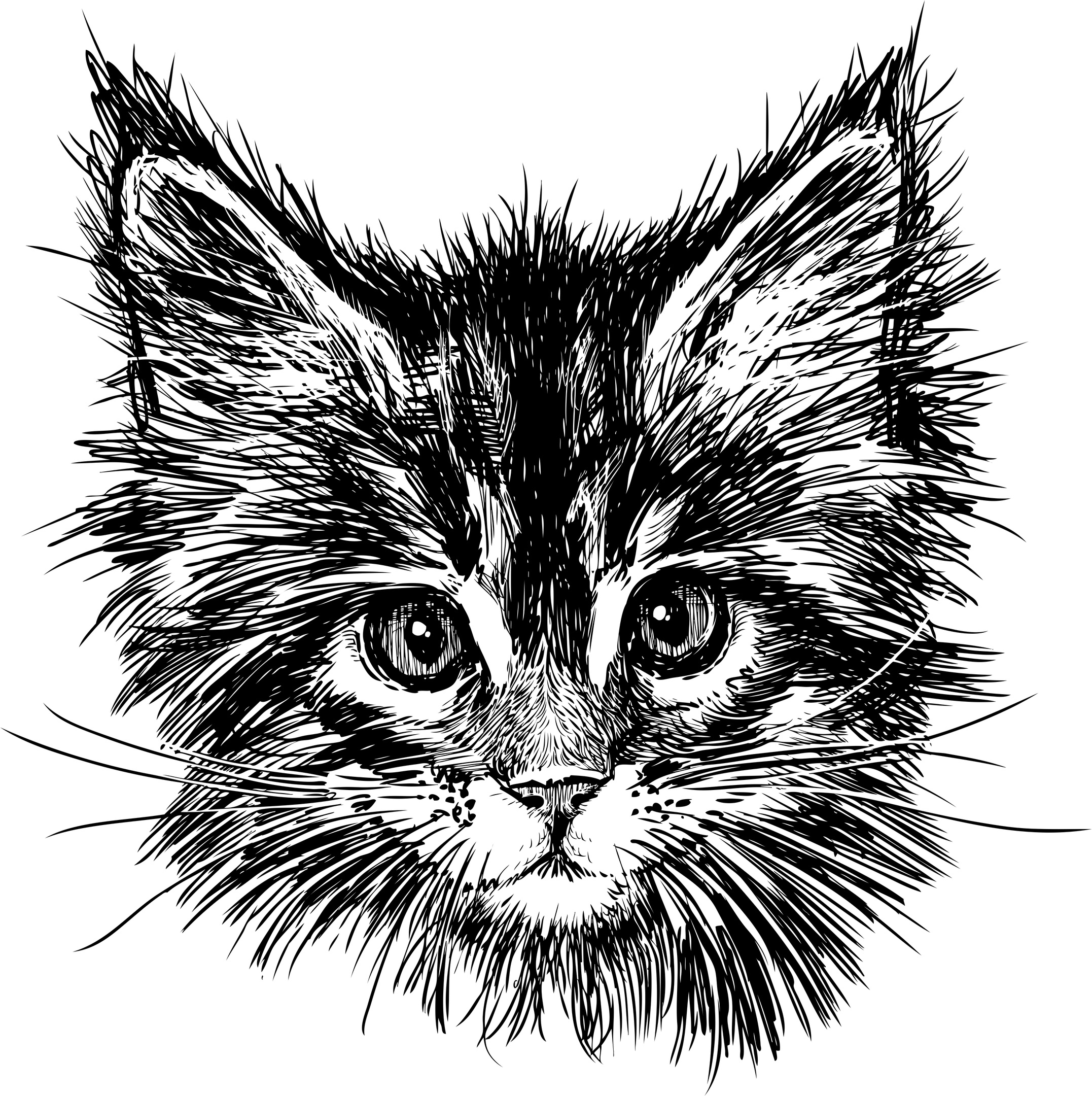 Hand Drawn Cat Free Vector
