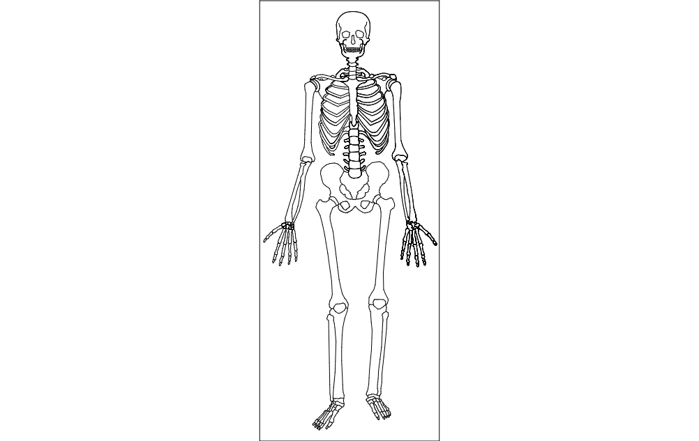 Human Skeleton Dxf File Free Download 3axis Co