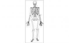 Human Skeleton dxf File